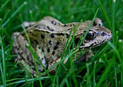 5 Ways to Get Rid of Frogs in Your Garden | Antipest Blog