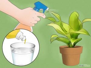 Spray on plant
