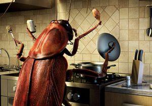 smart-roach